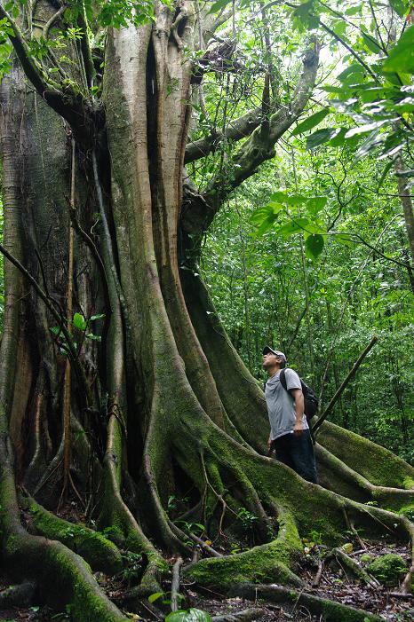 Un arbre gigantesque à la Serba Negra